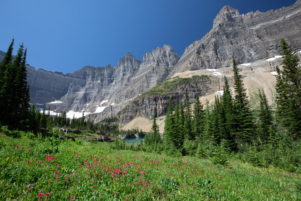 Beautiful wildflowers on the Iceberg Lake trail.