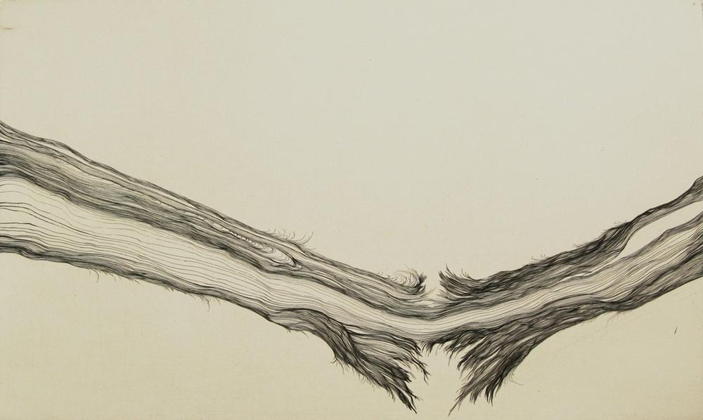 limb (crop).JPG