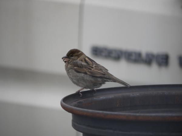 small_bird_1.jpg