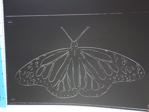 monarch_butterfly_cut_1.jpg