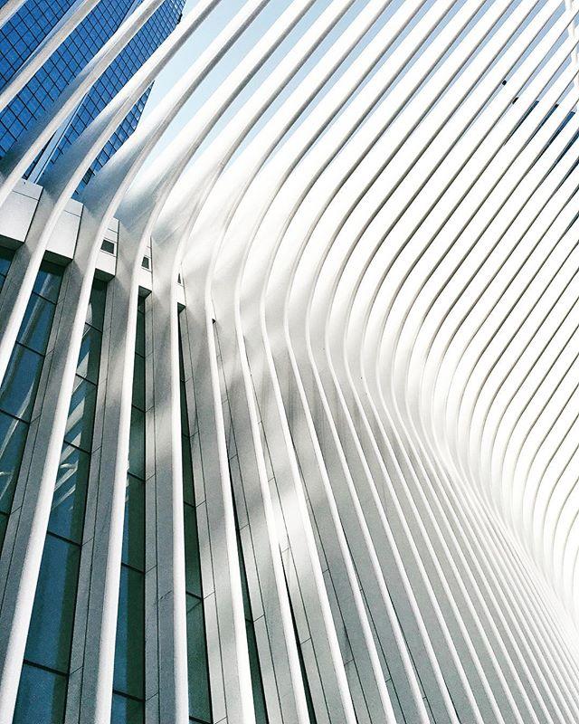 White dove. #911 #oculus