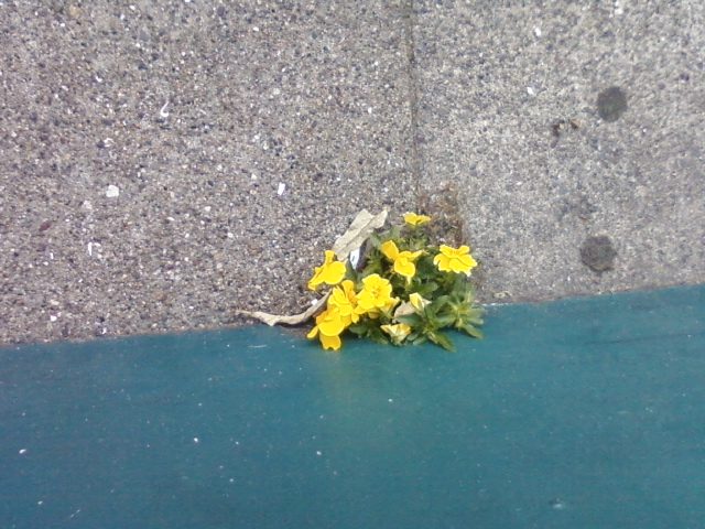 Sidewalk-Flowers.jpg