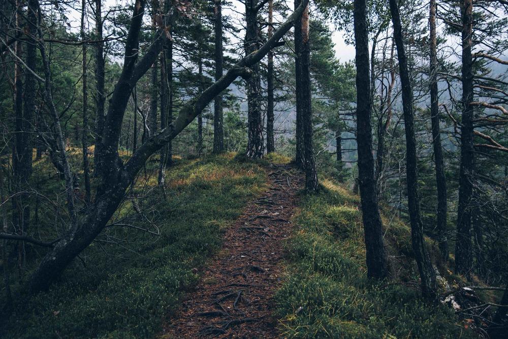 YA-woods