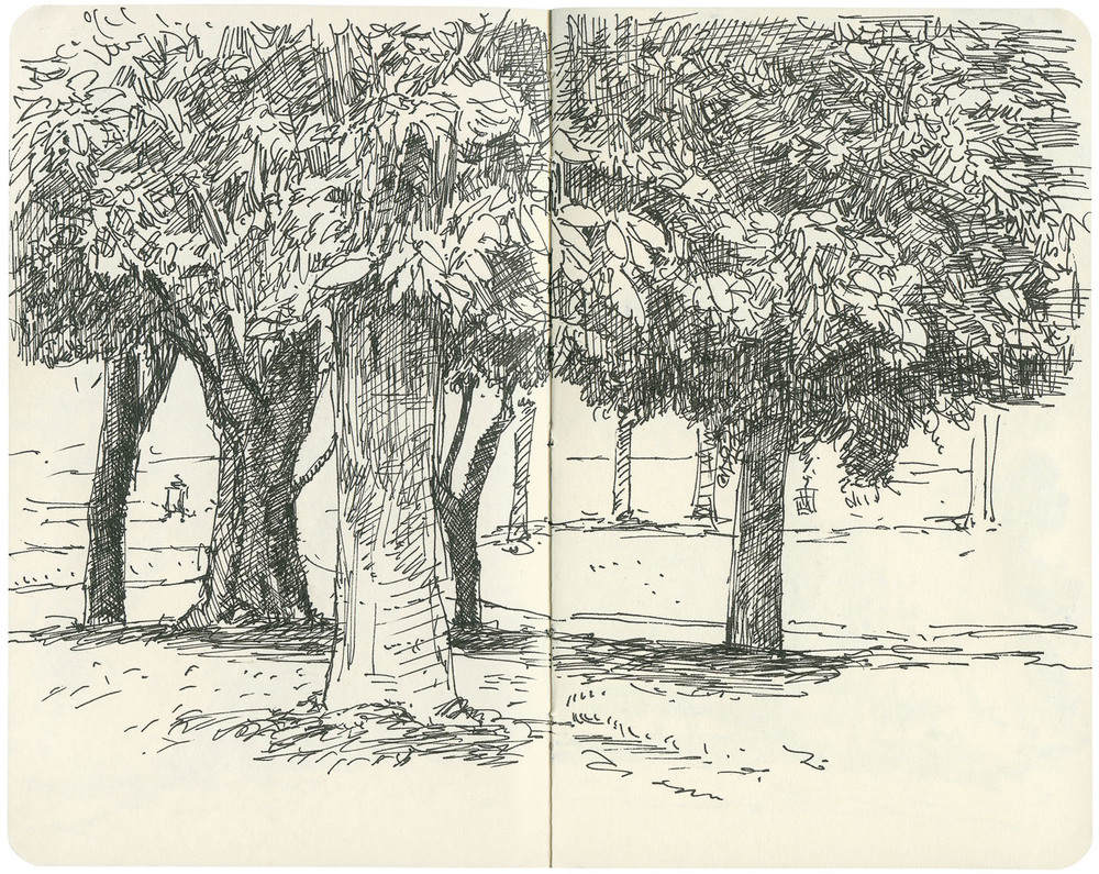 Sketchbook: Park Trees