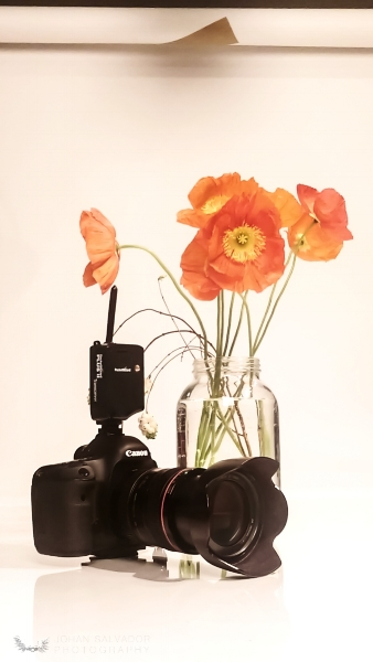 - Getting ready to do another set of photos for my client. This time I get to work with some delicate wild flowers.