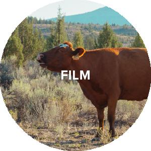 film_Circle_type-02.png