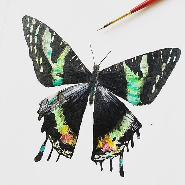 I've been playing with some studies of butterflies recently for a new series...I used ink for the black here but not loving any of it. It's not watery enough, it's not loose enough. So more experimenting today to get the look I'm dreaming of in my head. #illustratorsoninstagram #illustrator #illustrator #illustrators #risingtidesociety #creativeentrepreneur #butterflies #butterfly #nature #natureart #insectart #metamorphosis #watercolor #watercolorartist #watercolor_daily #bts #onmydesk #sketchbook #practicemakesperfect #instaart #communityovercompetition #creativeatheart