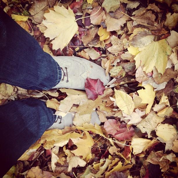 les feuilles mortes #Maryland #Annapolis