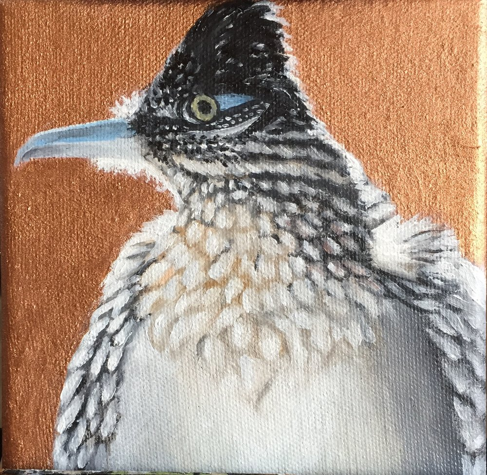 New Mexico Critters:  Greater Roadrunner