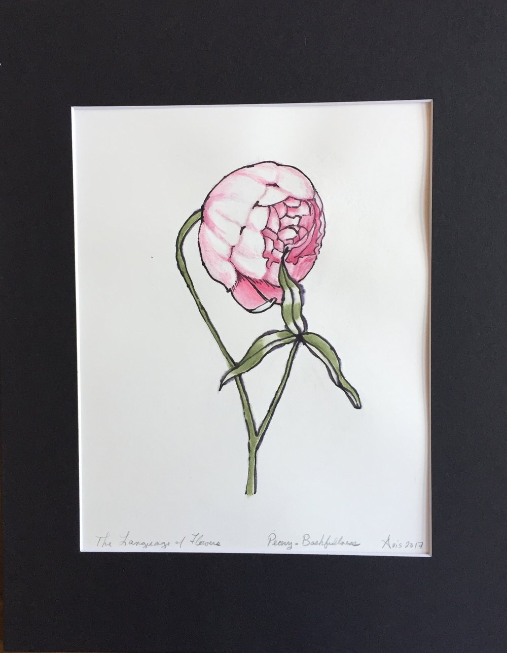 The Language of Flowers, Peony-Bashfulness.