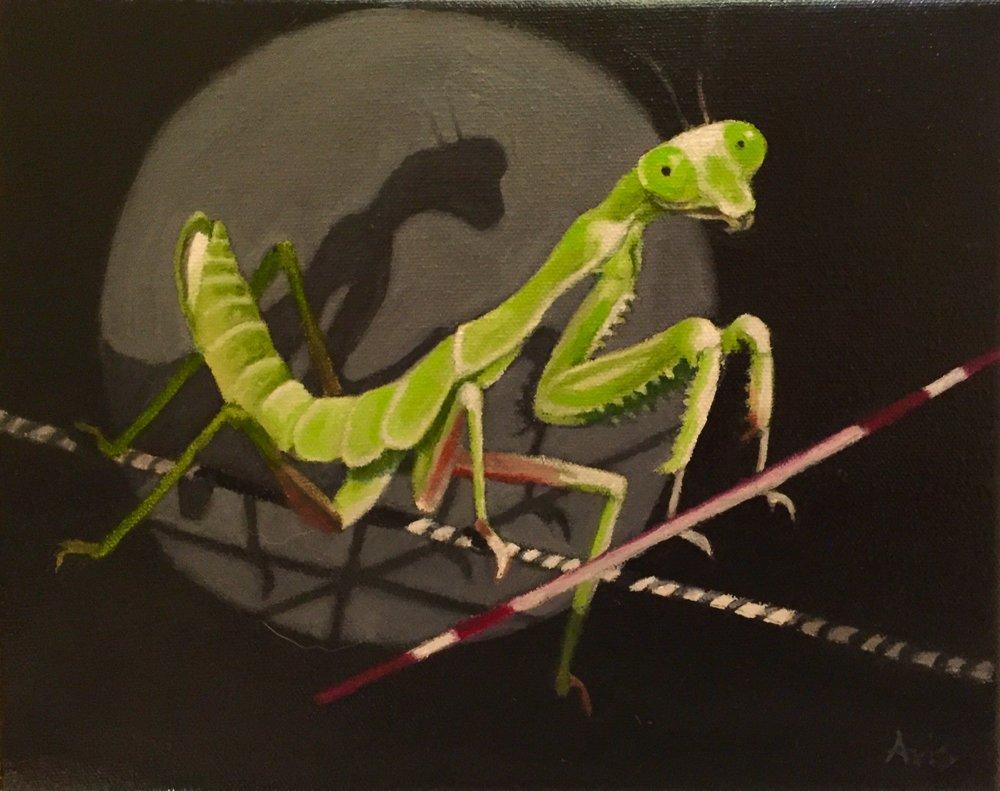 The Magnificent Mantis