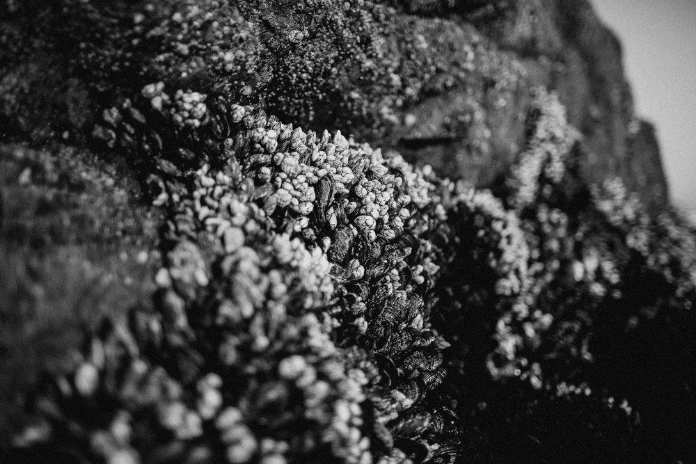 gretchen_gause_photography-232.jpg