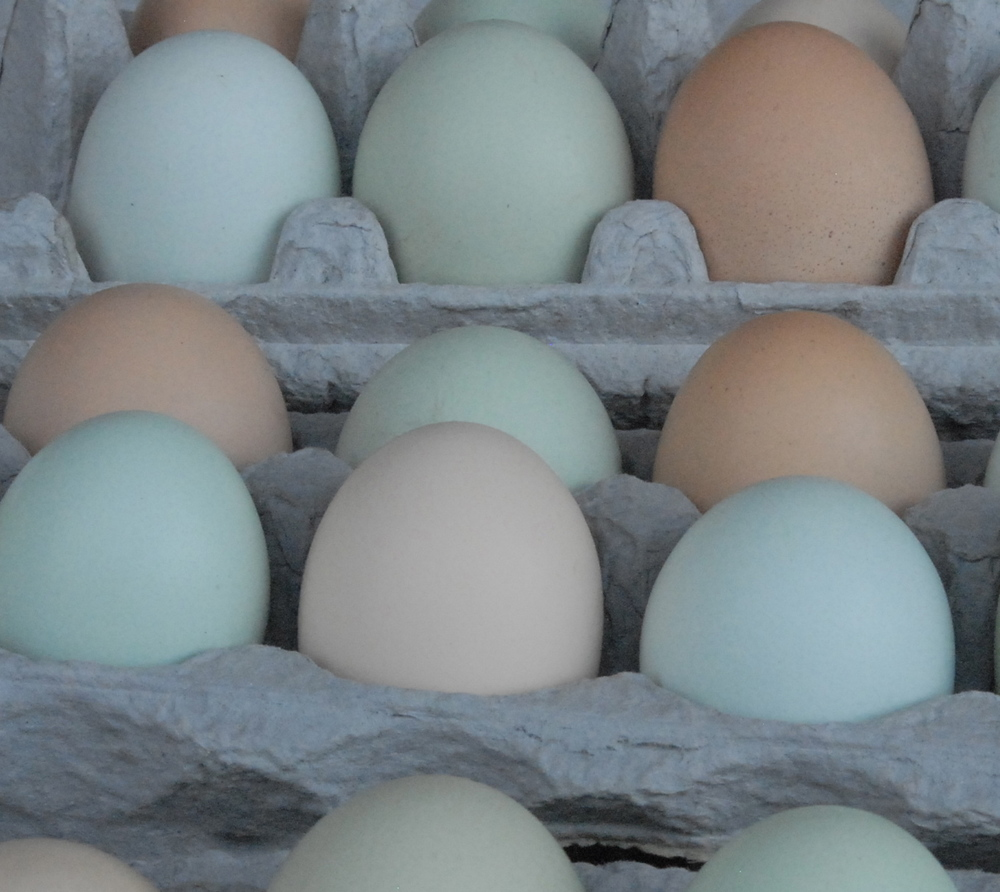 Local eggs at Los Ranchos Market-- in beach colors of watery green and blue and sand