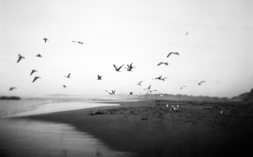 Birds4408_007_.jpg