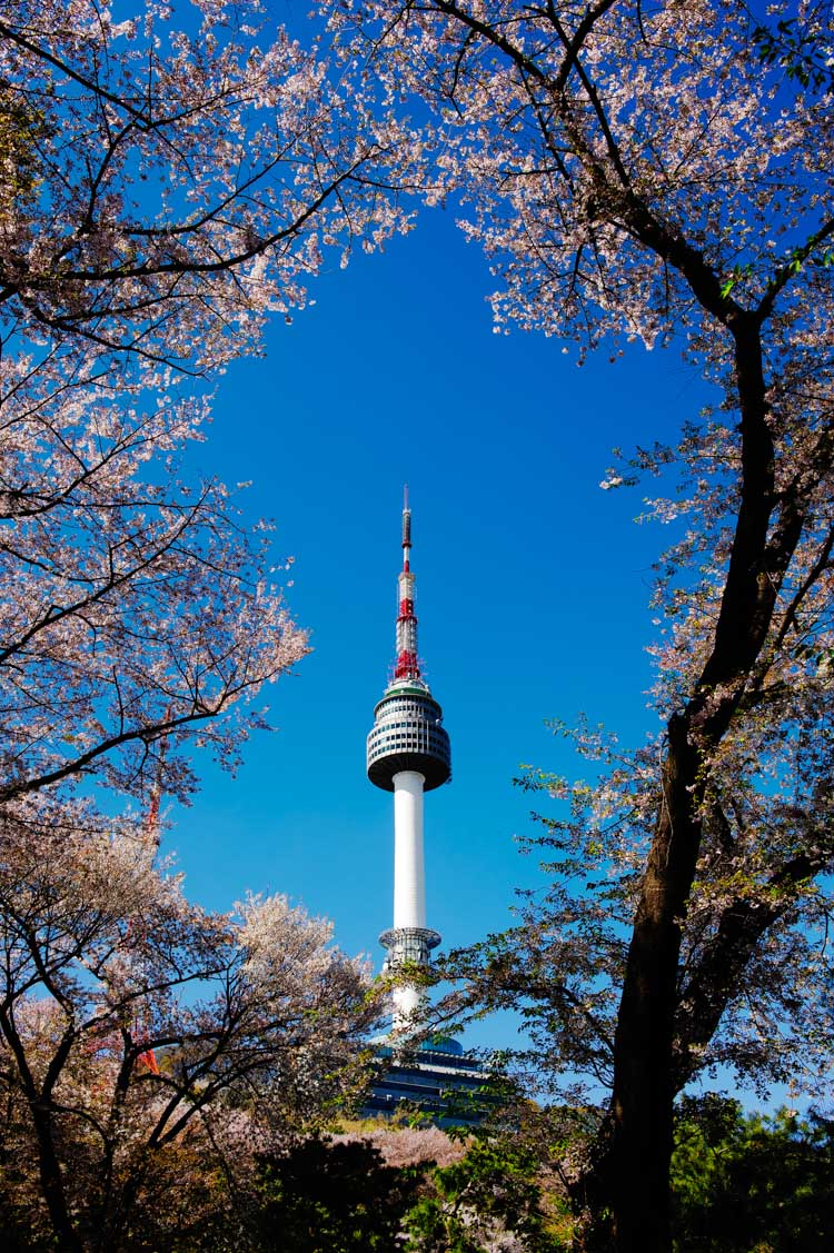 N Seoul Tower in spring. The cherry blossoms were in the waning days of their season but still offered much to delight your eyes and other senses. [AHMAD ISKANDAR]