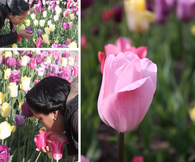 VBisono_Tulips11.jpg
