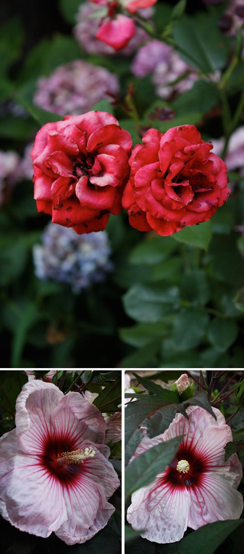 VillaBisono_FlowersJul112011.jpg