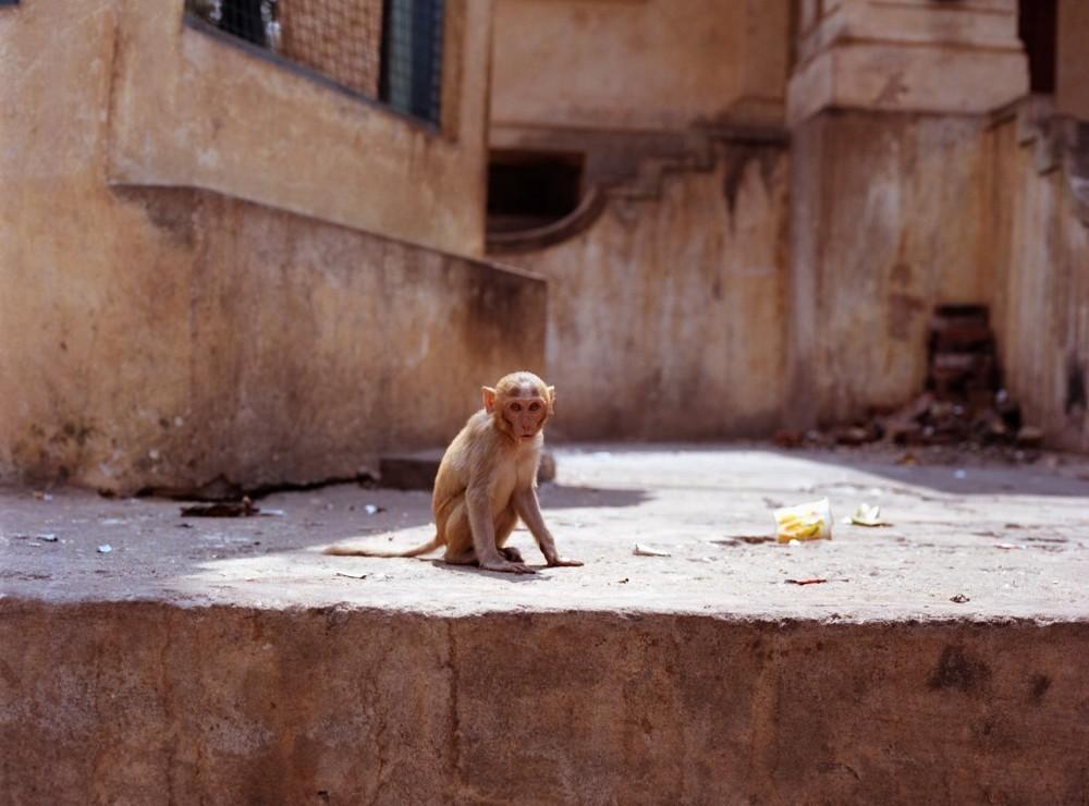 monkeyboy copy.jpg