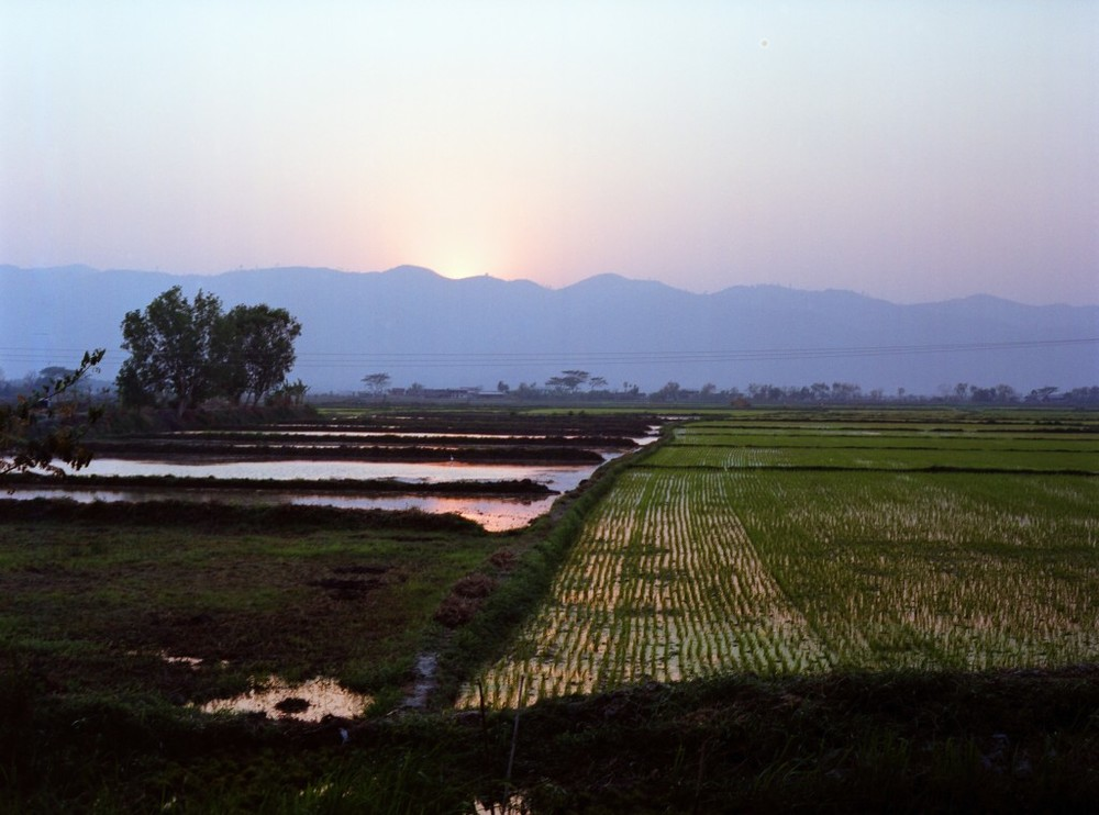 sunsetonricefields copy.jpg