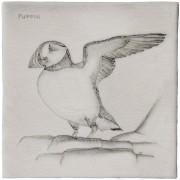 cmbirds-puffin.jpg