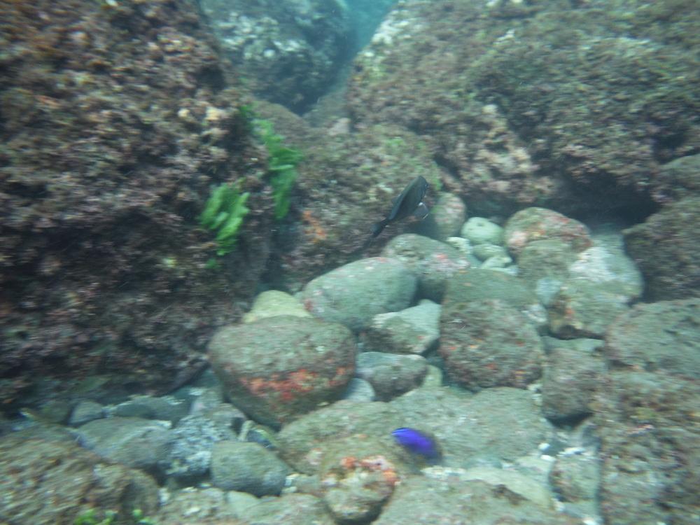 snorkeling playas del coco costa rica