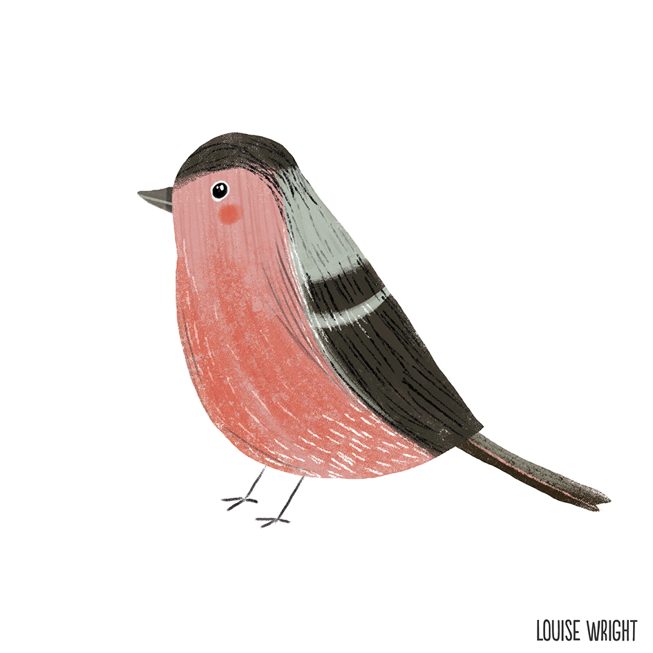 bullfinch louise wright.jpg