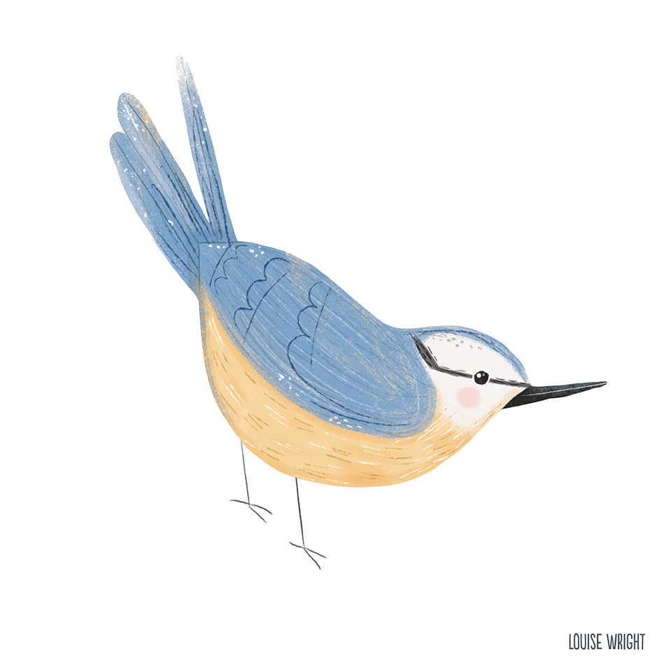 nuthatch louise wright.jpg