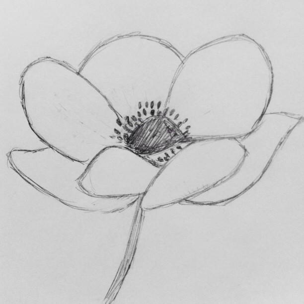 anemone sketch by samantha hirst