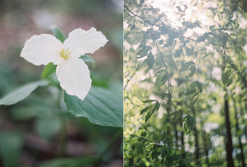 trilliums in the forrest make a perfect bridal shoot backdrop