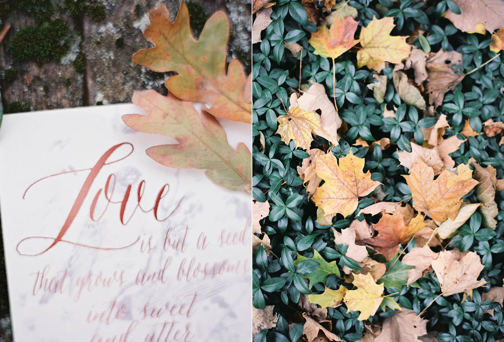 fall details organic calligraphy