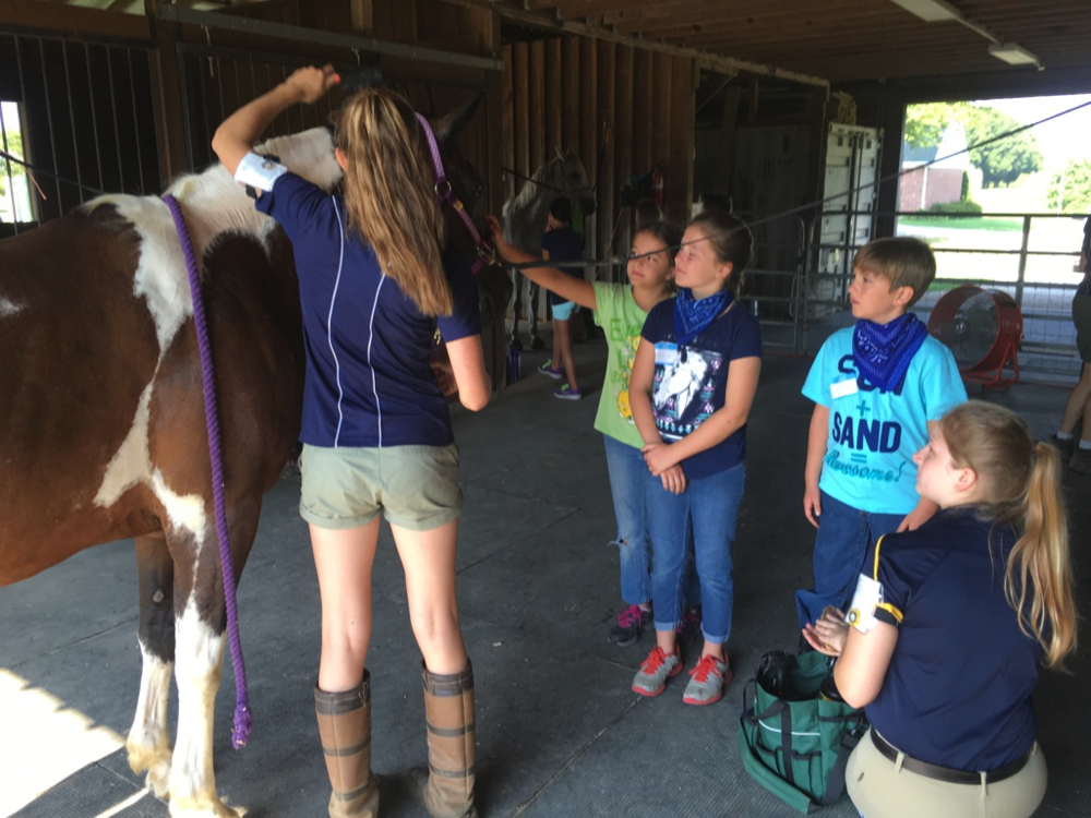 Learning parts of the horse and basic grooming.