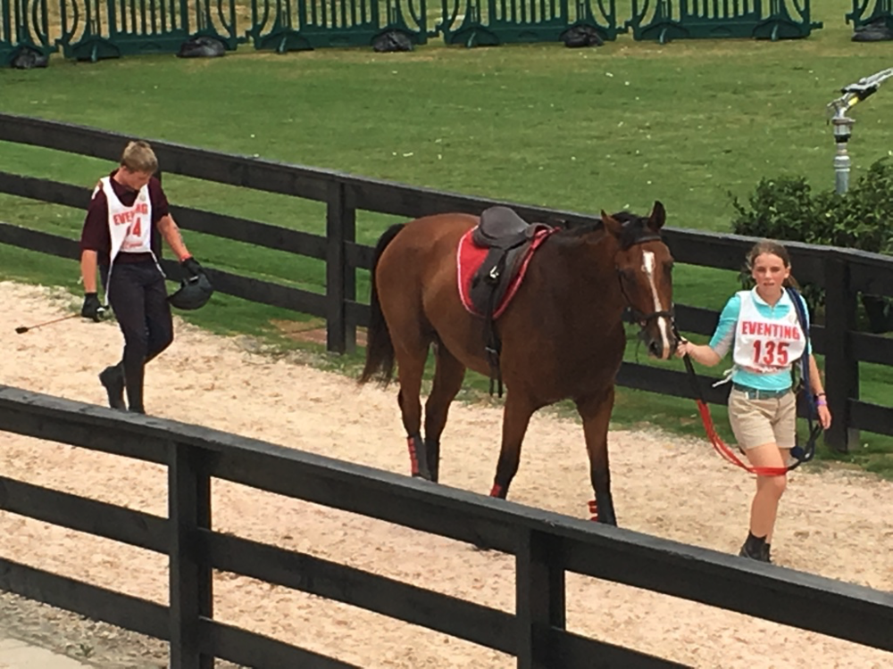 Ethan and Shamgar walking back to the barn with the Mid-south team's stable manager after the cross-country phase at the Eventing championships.