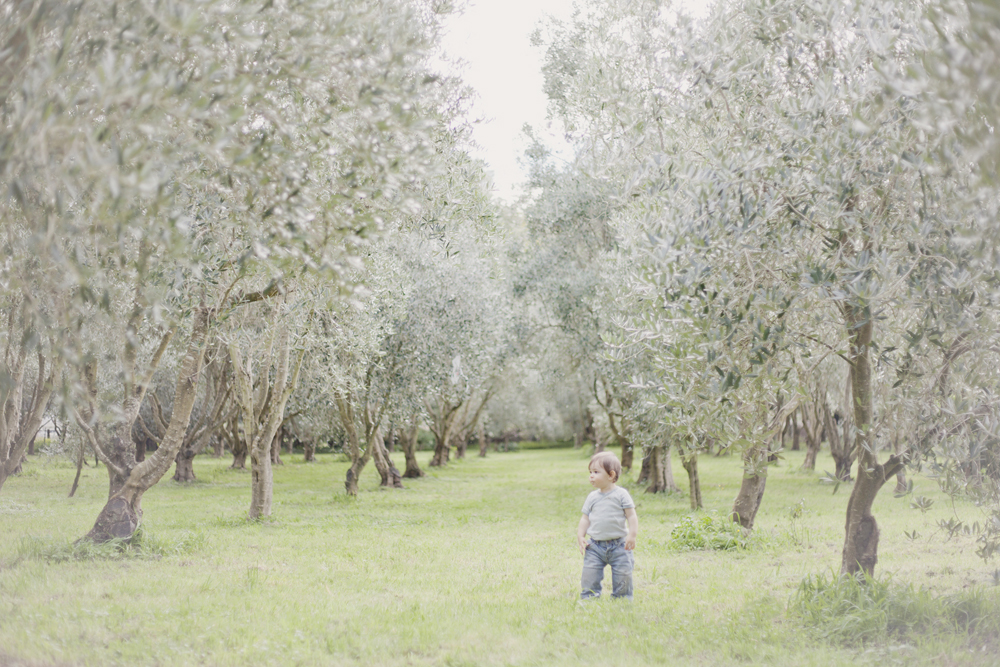 olive_5.jpg