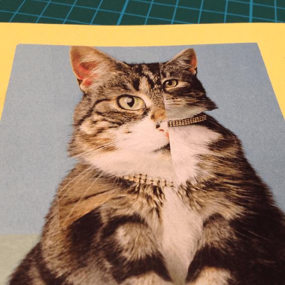 CChorus_MikeDipreCollage_Cat1.png