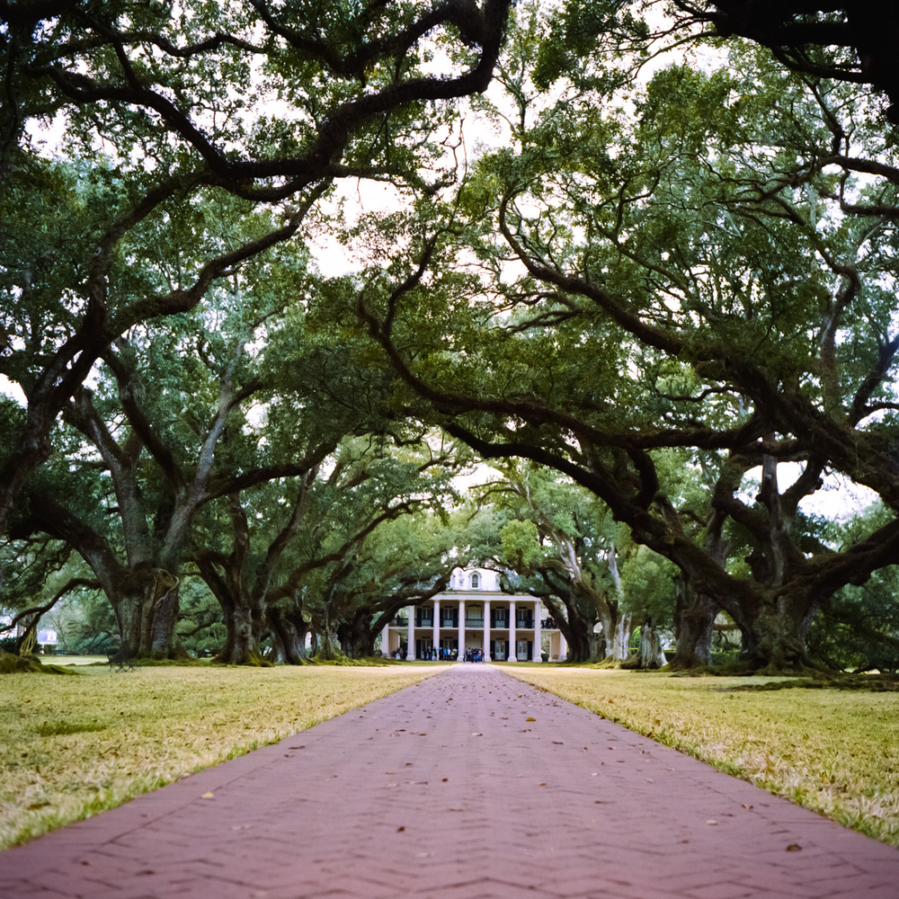 The view of Oak Alley plantation. A beautiful property with a disgraceful history. The plantation tour only serves to prop up the plantations owners with little mention of the men and women who were slaves there. The Oak trees are beautiful tho