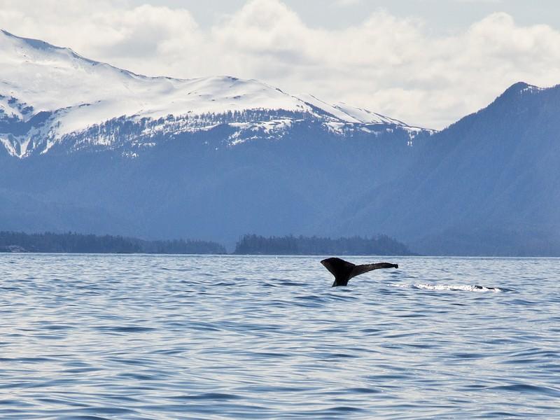 2138 whale.jpg