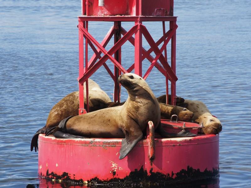 Alaska 2012 (50).jpg