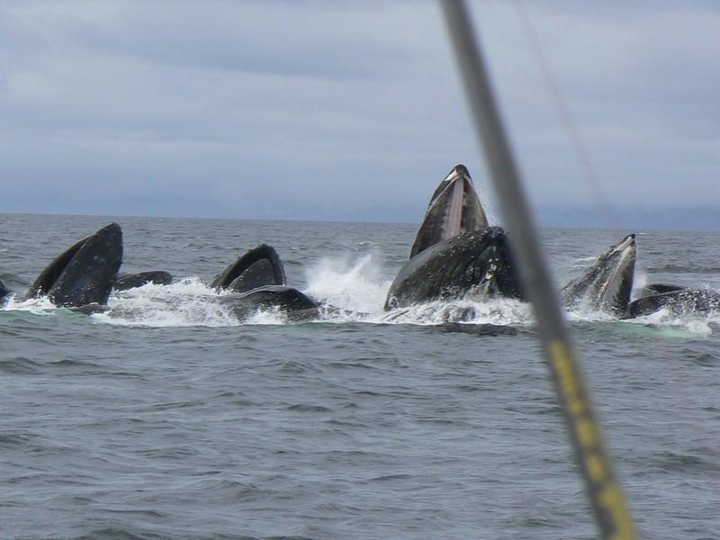 Wale.jpg