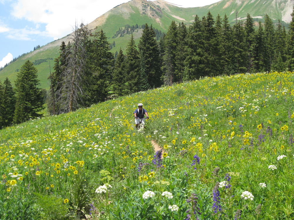 Crested Butte Wildflowers Mountain Bike.jpg