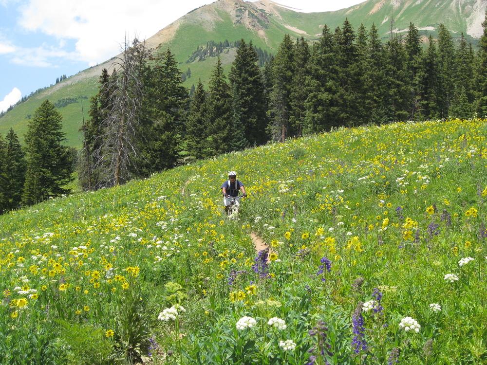 Crested Butte Wildflowers Mountain Bike.jpg