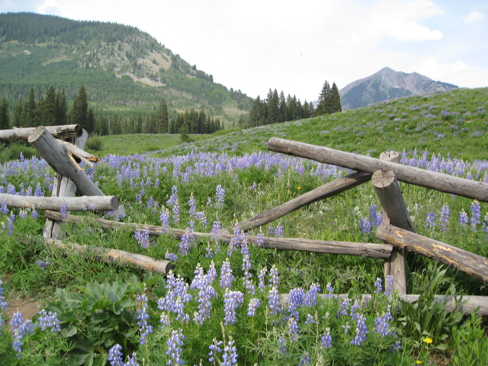 Wildflowers crested Butte.jpg