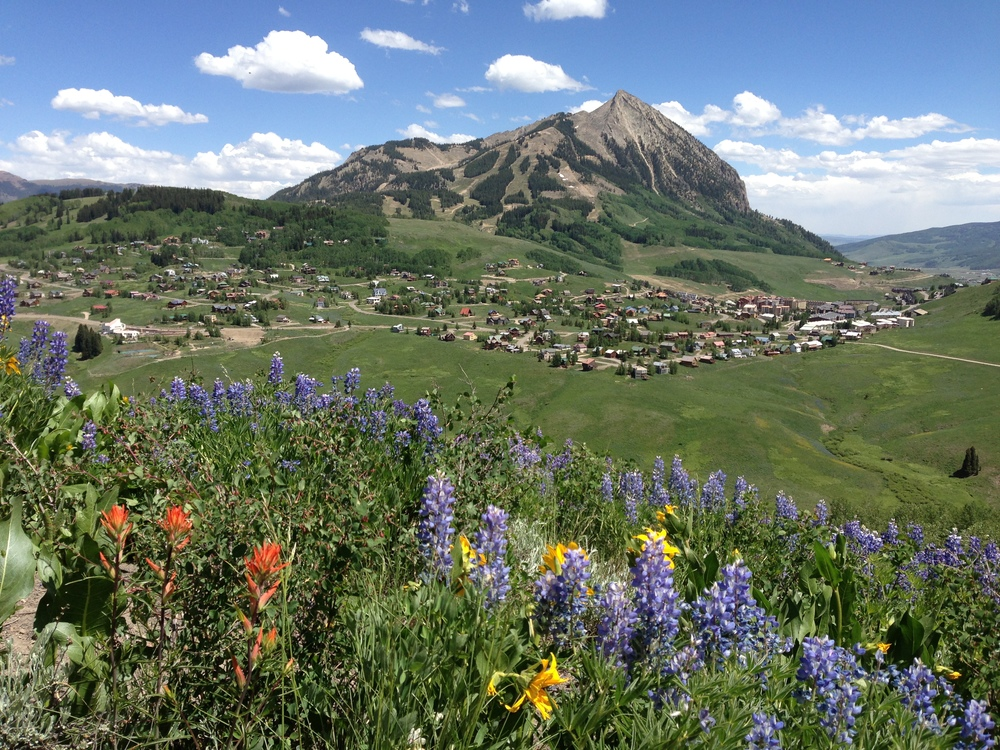 Crested Butte wildflowers and peak.jpg