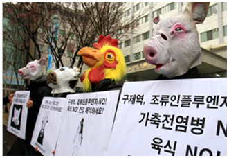 2South Korean H5N1 Protest copy.jpg