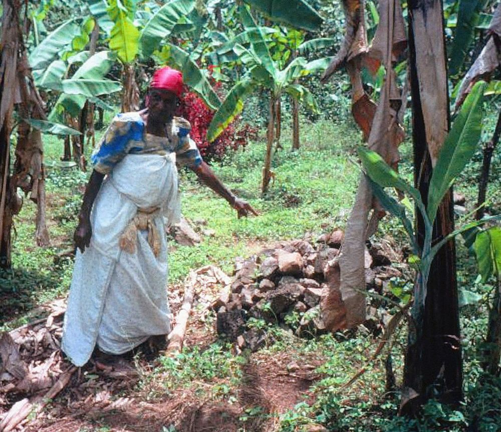 Matilda Namuli, 80, lost her husband and 7 of her children to AIDS, and is now raising 23 orphaned grandchildren. She is pointing to one of her daughters' graves, buried in a Ugandan village.