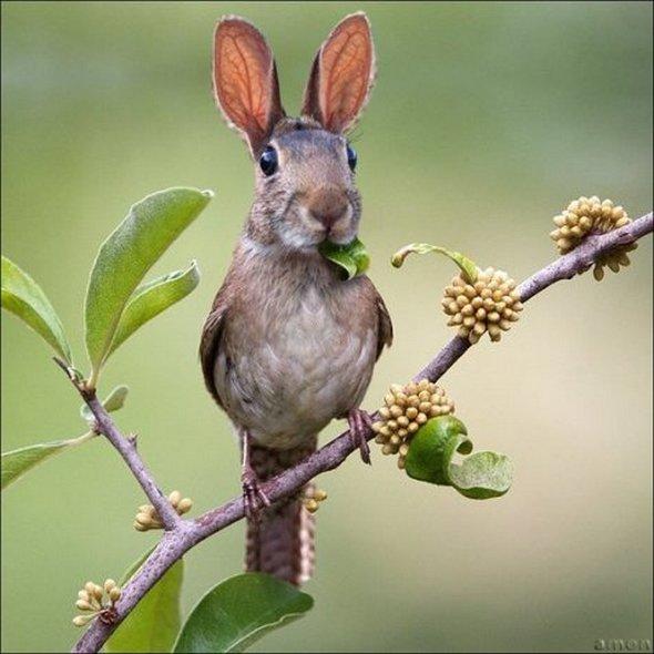 bunnybird.jpg