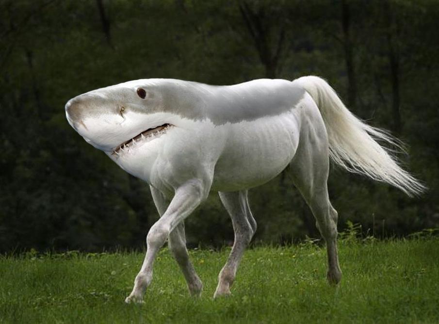 hybrid shark.jpg