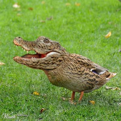 hybrid crocoduck.jpg