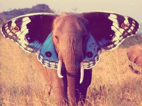 elephant-butterfly-ears-photoshop-animal-hybrid-beautiful-inspiration-nature-animal.jpg