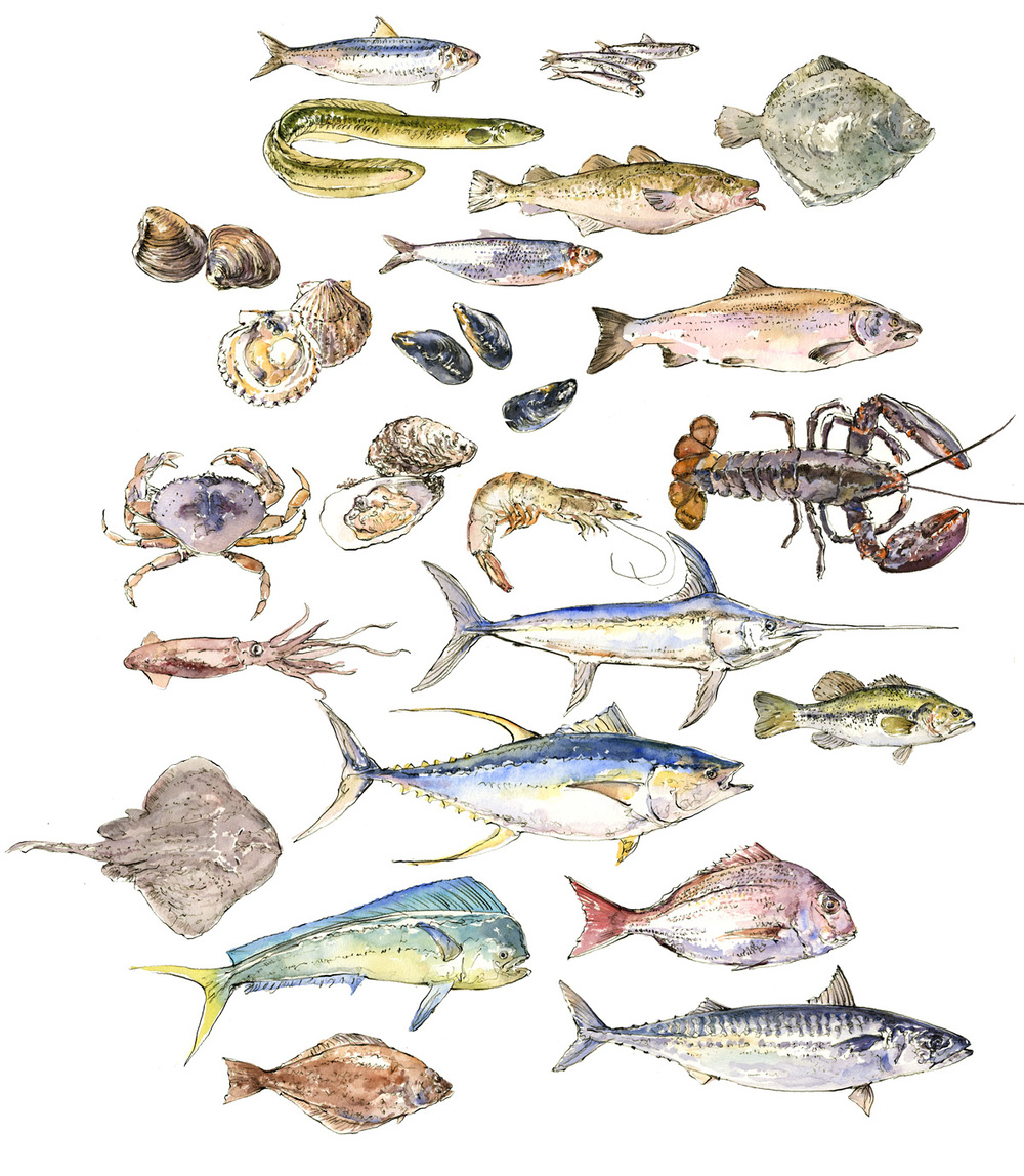 saveur fish chart 150.jpg
