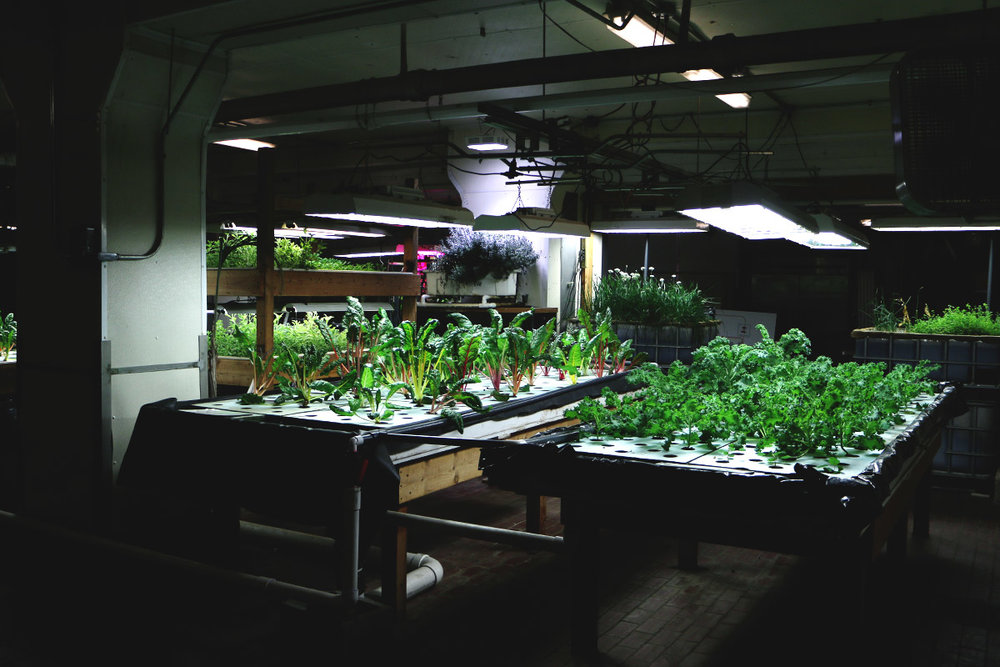 The Plant's basement greenhouse, part of the self-sustaining system at the facility.